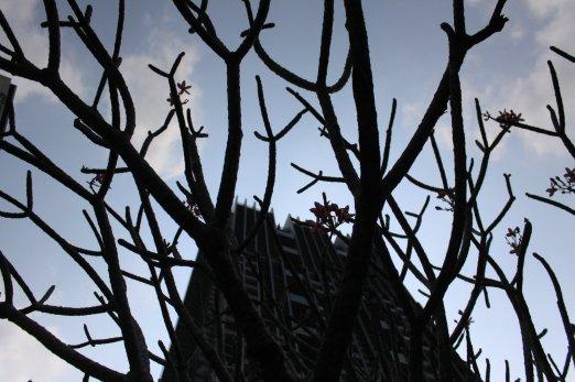 Branches / Thailand